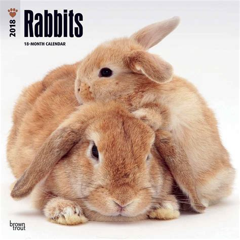 rabbits calendar 2018
