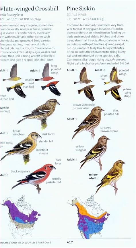 sibley birds of east sibley