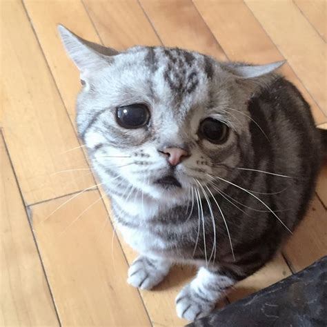 el gato mas triste de todo internet bored panda