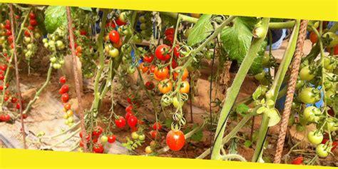 How To Grow Organic Vegetable Garden Quick Read How To Grow An Organic Vegetable Garden