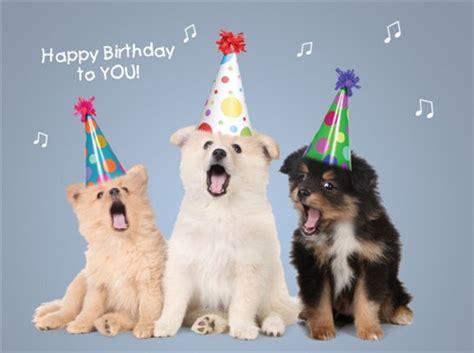dogs singing happy birthday dogs singing happy birthday my