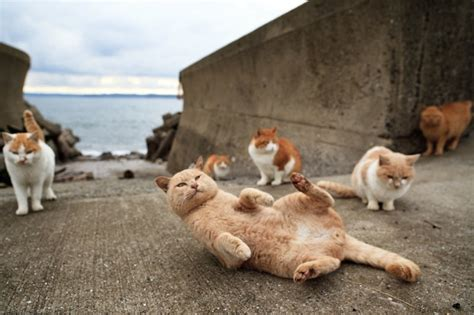 cat island in japan cat crazy tourists lured to japan s cat islands where