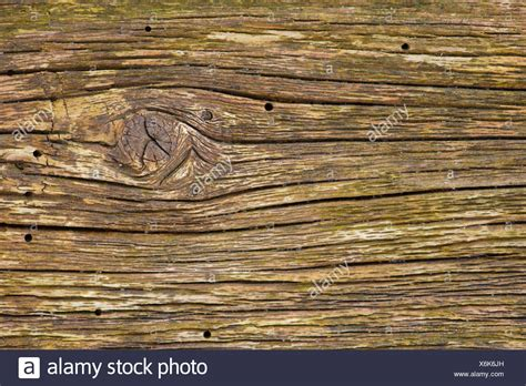 Woodworm Holes Stock Photos Amp Woodworm Holes Stock Images