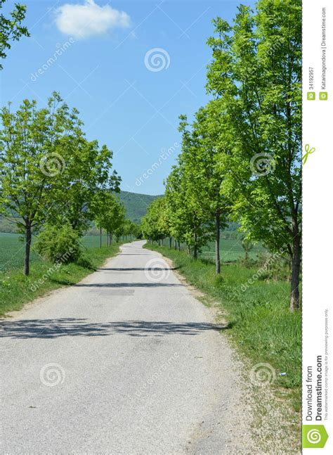 time trees directions tree alley royalty free stock photography image 34192957