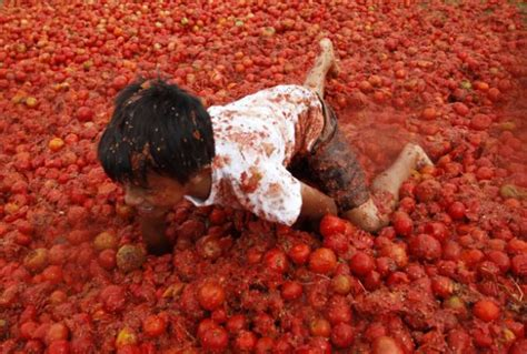eating tomatoes cuts heart disease risk by a quarter the gm tomato that could help reduce heart disease daily