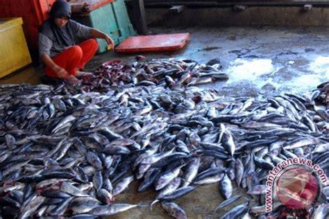 Ikan Keumamah Aceh 5 Pcs ikan kayu sulut makin diminati pasar internasional