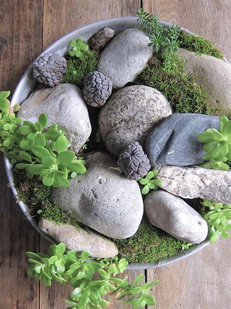 Faire Pousser De La Mousse Vegetale by Faire Pousser De La Mousse Vegetale Daiit
