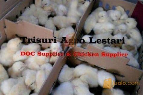 Jual Bibit Ayam Broiler Di Bandung jual d o c bibit ayam broiler pedaging bekasi jualo