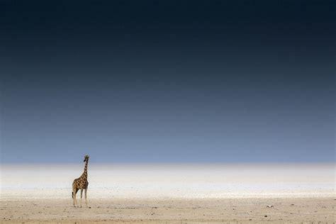 siena international photo awards красивейшие фотографии природы с фотоконкурса siena