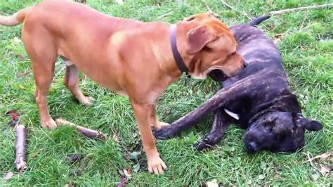 Spiele Für Hunde Im Garten by Unsere Hunde Spielen Im Garten