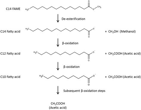 methyl ester attenuation of fatty acid methyl esters fame in