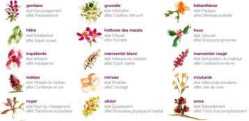 ou acheter les fleurs de bach gamme complexes fleurs de bach bio du dr theiss