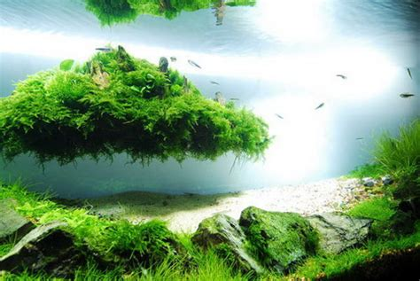 japanese aquascape beautiful aquascaping photo collection quertime