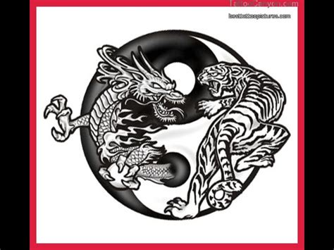 dragon yin yang tattoo amazing and tiger yin yang design
