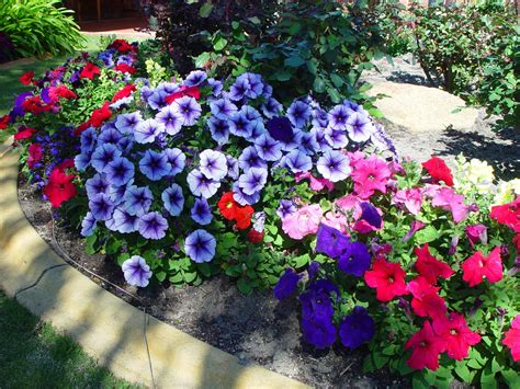 Images Garden Flowers File Flowers In Garden 1 Jpg Wikimedia Commons