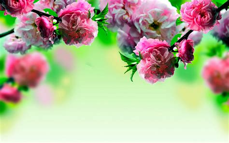 spring floral spring flowers wallpapers