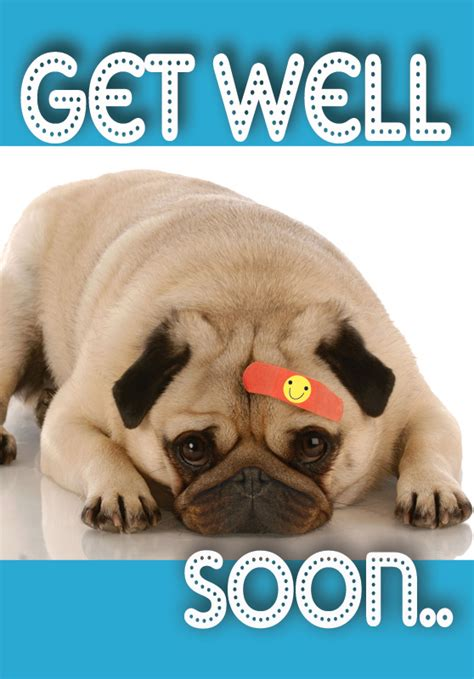get well pug pug get well quotes quotesgram