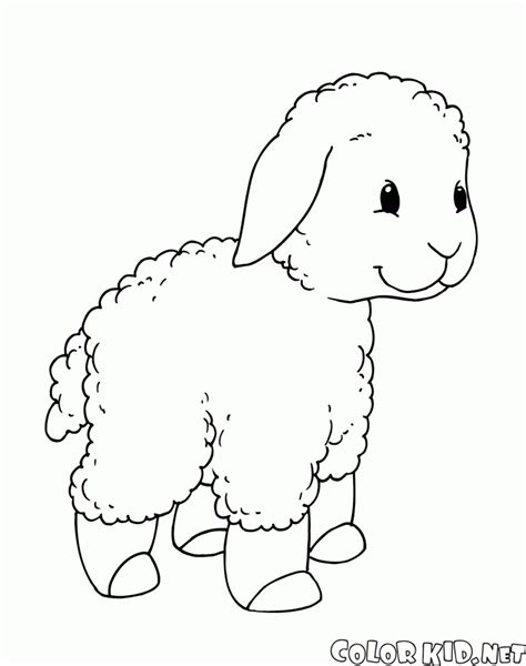 small sheep coloring page coloring page little lamb on a walk