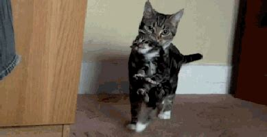 cat gif cat gif find on giphy