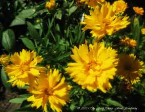 Yellow Flower Perennials - yellow perennial plants images