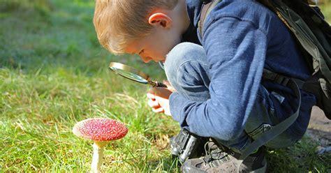 Pilze Im Heimischen Garten by Giftpilze Die 5 Gef 228 Hrlichsten Heimischen Arten Mein