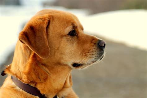 puppy profile profile images search