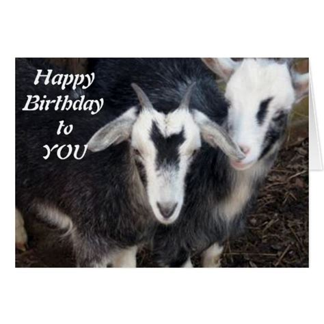 Happy Goat Meme - happy birthday goat card memes