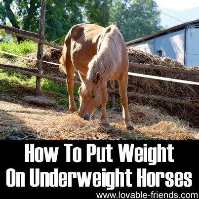 how to put weight on a how to put weight on underweight horses lovable friends