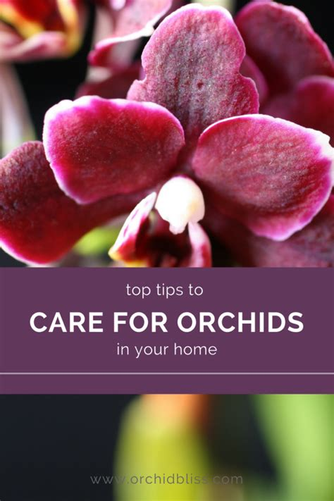 best 28 care for your orchids how to care for orchids