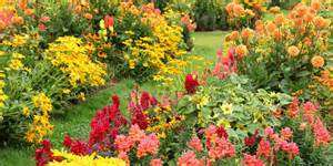 flowers that bloom in fall ornamental flowering plants for autumn colour the garden of eaden