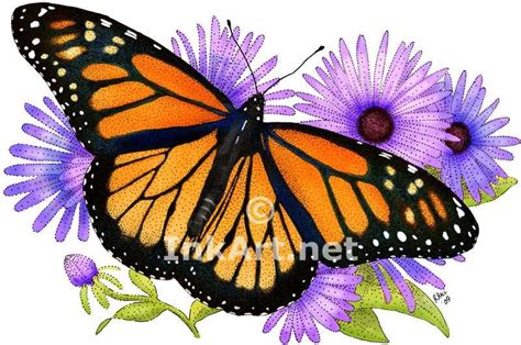 monarch color monarch butterfly images monarch butterfly danaus
