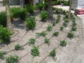 How To Make A Zip Line In Your Backyard Free Landscape Design Offer For Tampa From Keep It Green