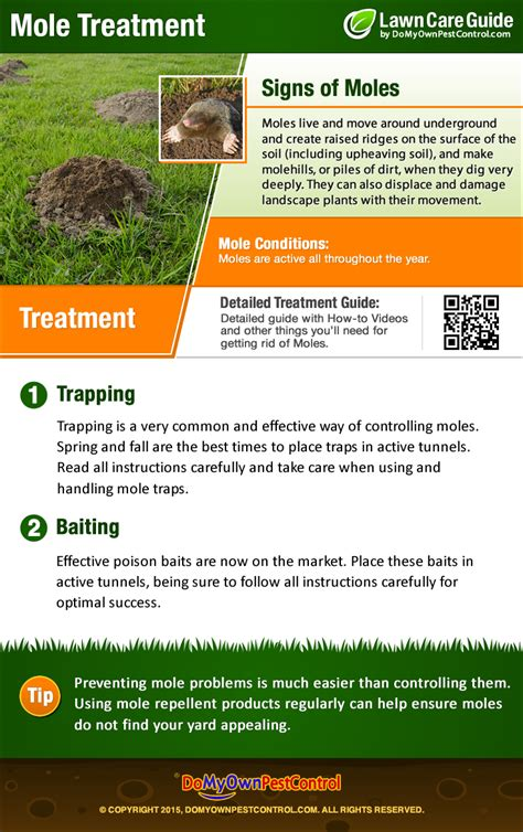 how to get rid of moles in my backyard how to get rid of moles in yard mole treatment control