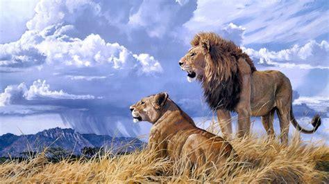 lions roar lions roaring hd wallpaper hd latest wallpapers