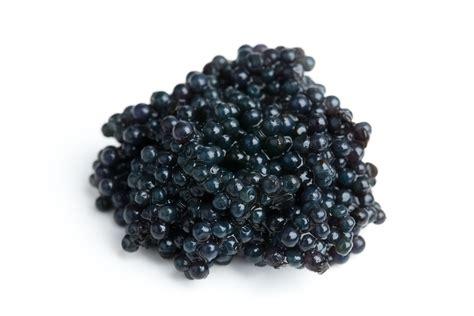 caviar color buy hackleback caviar buy sturgeon caviar