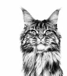how much does it cost to microchip a how much does it cost to microchip a cat royal canin 174