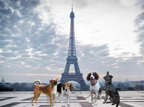 tower dogs francia otorga a los animales de compa 241 237 a derechos como seres vivosnuevas ideas para