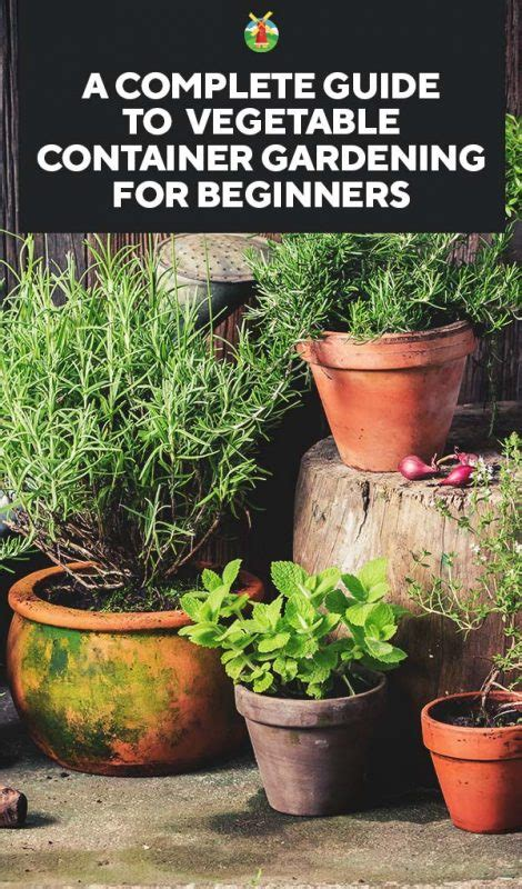 a complete guide to vegetable container gardening for