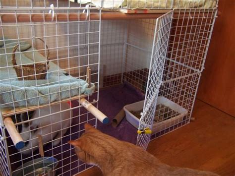 is building a house cheaper than buying one home made bunny condo made using wire crates way cheaper than buying a ready made