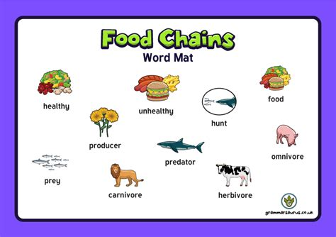 biography word mat ks2 new year 4 science animals including humans the food
