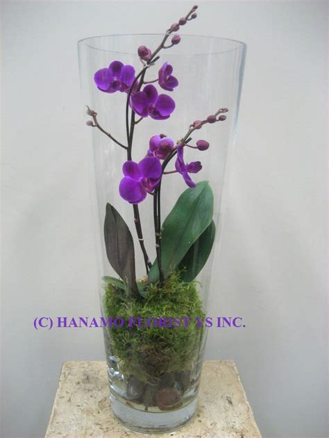 1000 ideas about potted orchid centerpiece on