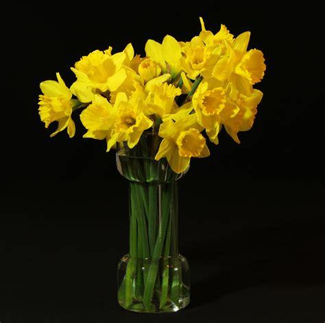 La Verne Vas Bunga Kuning fotos gratis flor amarillo orqu 237 dea arreglo floral