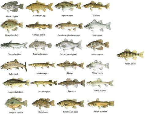 freshwater fish freshwater fish fishing chart sportsmans habitat