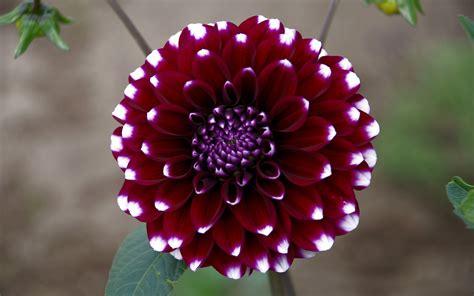 Blumen Für Sträuße 2749 by Die 51 Besten Blumen Sch 246 Ne Hintergrundbilder F 252 R Pc