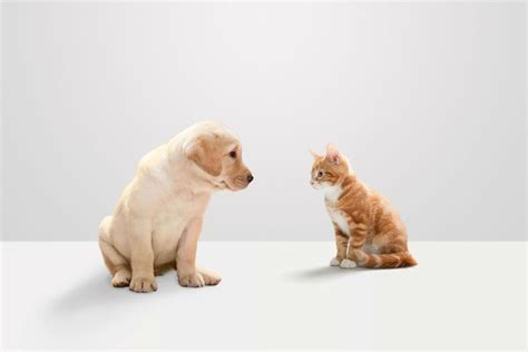 puppy vs kitten kittens vs puppies 10 reasons puppies are better