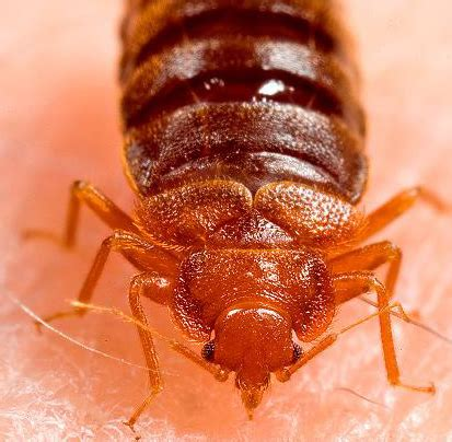 bed bug exterminator brooklyn pest control exterminators in new york city brooklyn and