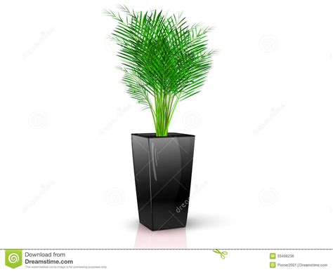 Black Vase With Flowers by Black Vase With Flower Royalty Free Stock Image Image