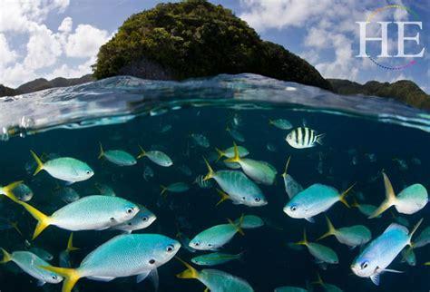 palau dive pristine palau scuba diving vacation he travelhe travel