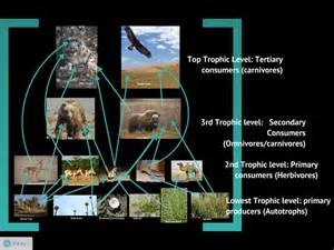 Plants In A Tropical Rainforest Biome - food chains the gobi desert