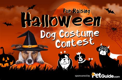 Halloween Costume Giveaway - petguide sponsors a fur raising halloween costume contest